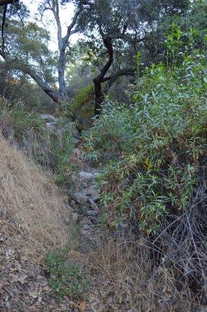 Ojai, CA: Dry creek