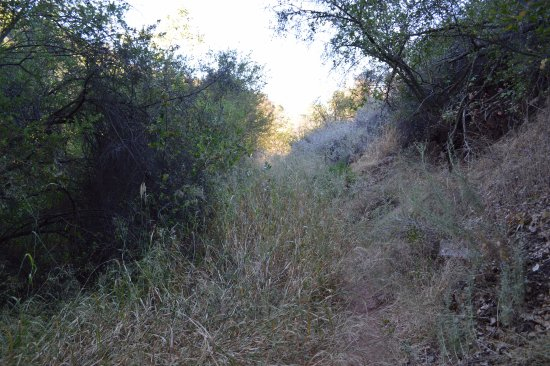 Ojai, CA: Trail with brushes - a hiking pole will help