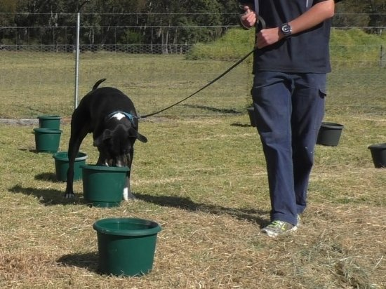 The Summit, Australia: All year round truffle hunts in the above ground training centre.