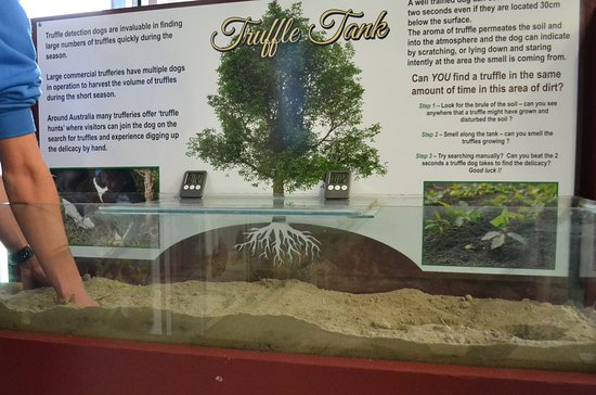The Summit, Australia: Interactive exhibits in the Truffle Discovery Centre