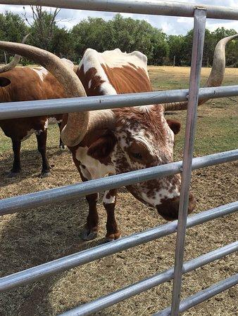 The Double U Barr Ranch: photo6.jpg