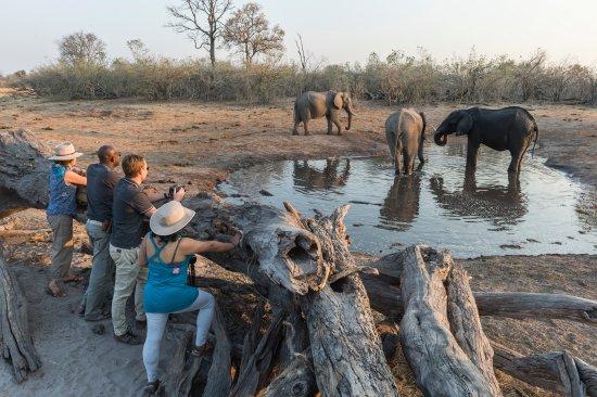 Wilderness Safaris Savuti Camp: Log Pile Hide at Savuti Camp