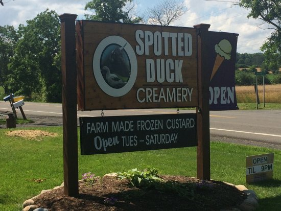 Penn Yan, NY: Spotted Duck Creamery