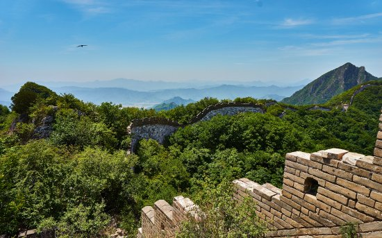 Beijing Great Wall Hiking: A bird flies above the Wall
