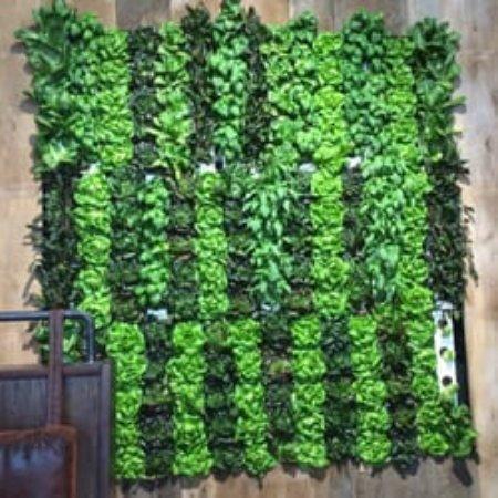 Riverview, Flórida: lettuce wall at Boca