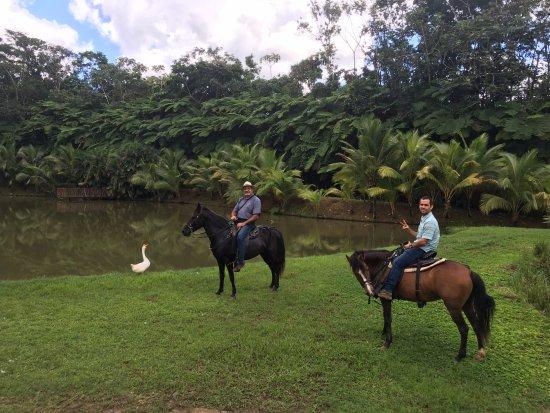Utuado, Puerto Rico: Cuba y Puerto Rico por una agricultura saludable...