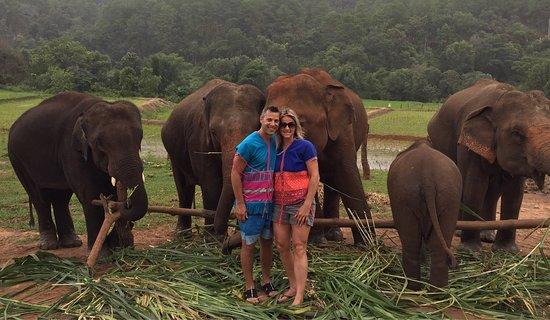 Feeding I Chiang Mai Elephant Camp Sanctuary Dumbo Spa