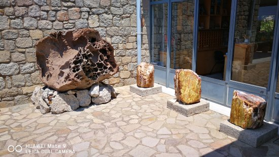 The Natural History Museum of the Lesvos Petrified Forest