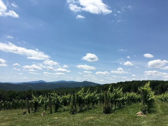 Linden, VA: View of vineyards