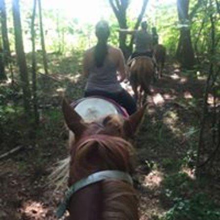 Liberty Hall Horse Farm