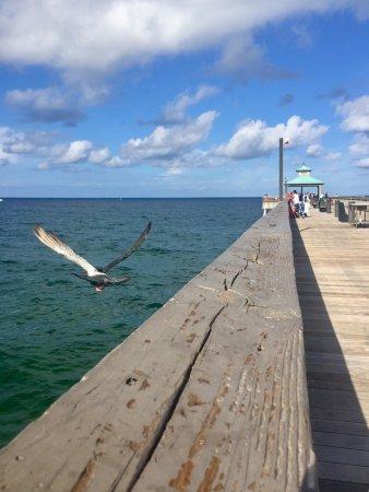 Wyndham Deerfield Beach Resort: photo5.jpg