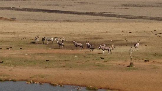 Middleburg, South Africa: DSC_1205_large.jpg