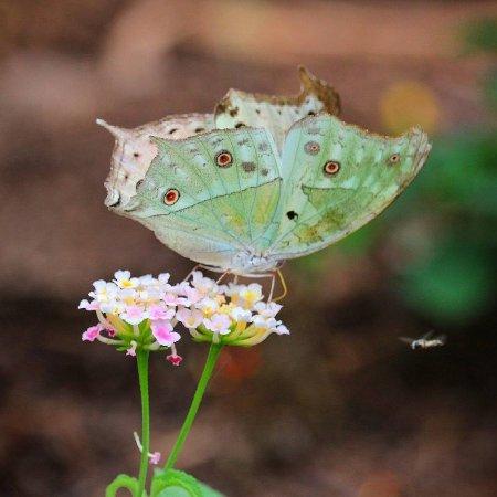 Butterfly House Sardegna
