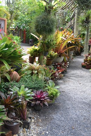 Phuket Botanic Garden: A Section Of The Bromeliad Collection