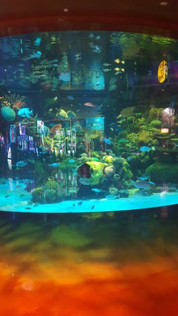 Fish tank picture of silverton casino lodge las vegas for Fish tank las vegas