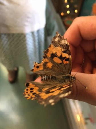 Jim Thorpe, Pensilvanya: Friendly Butterfly