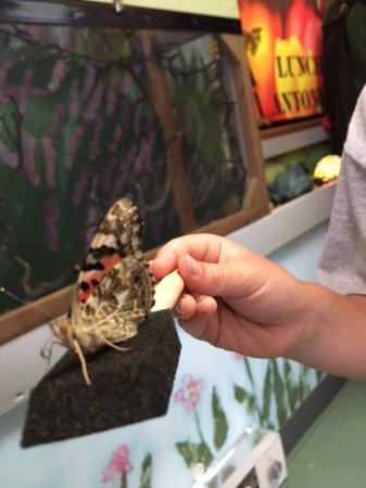 Bear Mountain Butterfly Sanctuary : Hungry Butterflies