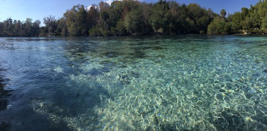 Salt Springs, FL: My Iphone does this place no justice, The beauty underneath is unmatched.