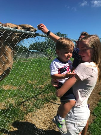 Brooksville, FL: It was really fun to feed the animals!