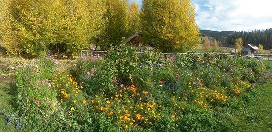 Linn Canyon Ranch: Garden
