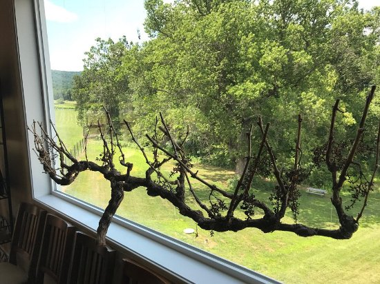 Huntly, VA: Vine in window