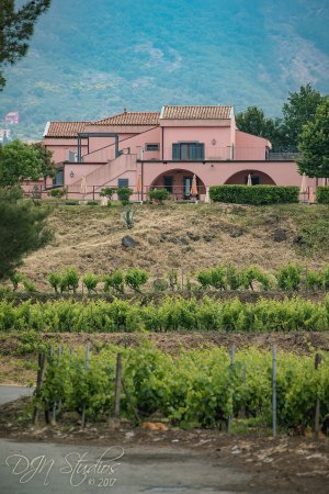 Agriturismo Tenuta San Michele: The hotel viewed from the vineyard