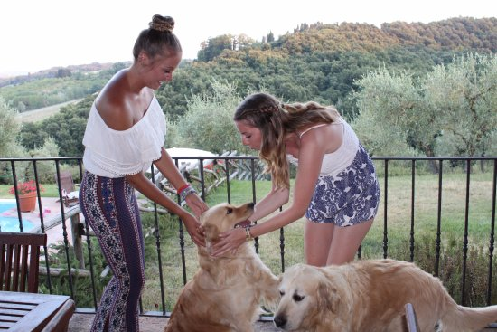 Peccioli, Italia: Beautiful property with Tuscan sunset (and owner's lovable dogs)