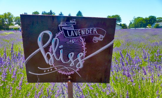 East Marion, Nova York: Charming sign in the lavender field.