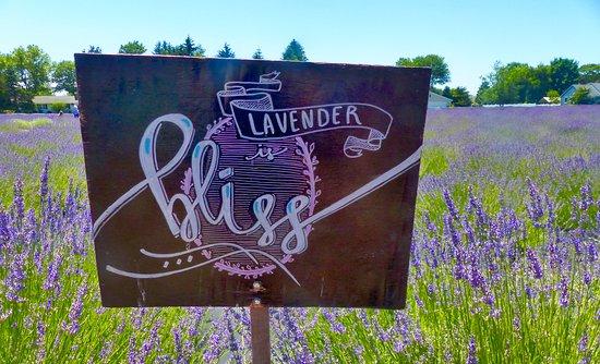 East Marion, Estado de Nueva York: Charming sign in the lavender field.