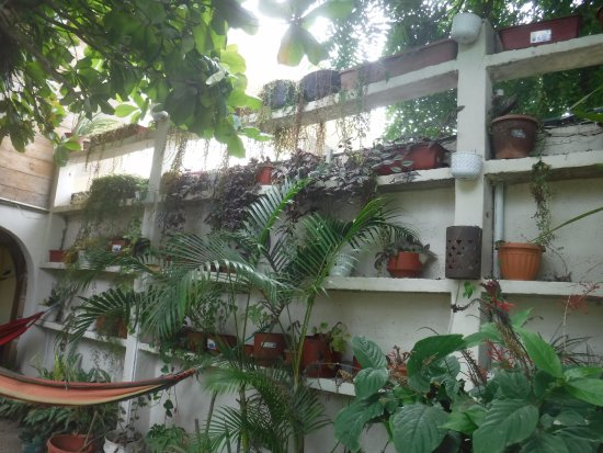Hostal The Sea Garden House: Vertical garden