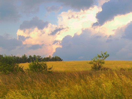 Hanover, بنسيلفانيا: Hay field