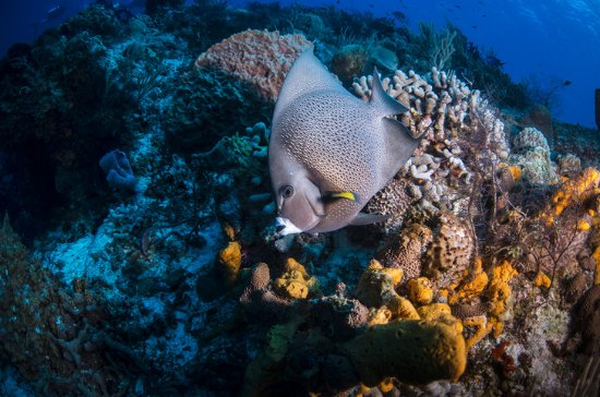 Brendal's Dive Center: Photo courtesy of Cardonna Adventures: