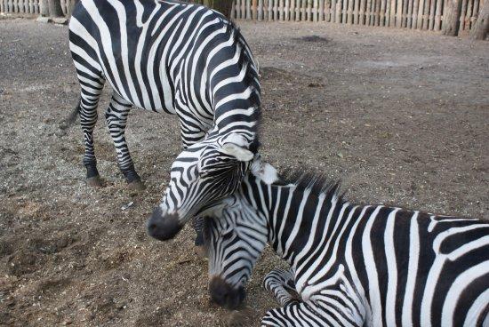 Zoopark Doksy