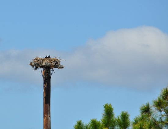 Nesting on Hunting Island, Beaufort, SC - Picture of Hunting