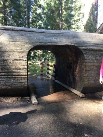 Three Rivers, Californien: Sequoia NP