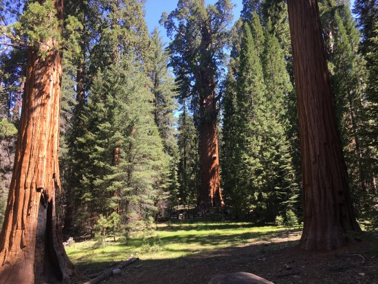 Sequoia and Kings Canyon National Parks: Sequoia NP