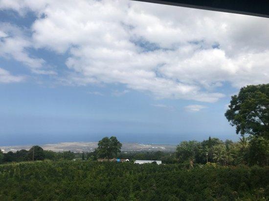 Holualoa, ฮาวาย: photo2.jpg