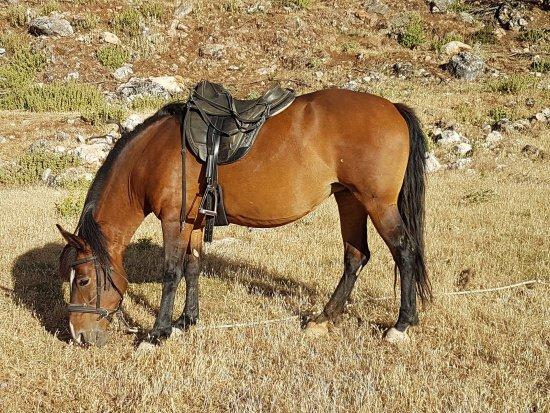Villanueva del Trabuco, España: Des chevaux bien nourris et montés sans mors