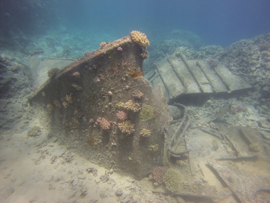 New Son Bijou Diving Center: Sometimes Dolphins, other times just wonderful fishes and corals, wreck and just fun over and un