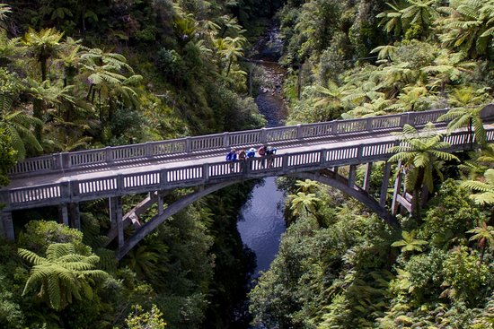 Forgotten World Adventures: Walk the short distance through native bush to the Bridge to Nowhere.