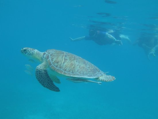 Water Island, St. Thomas: Great place to snorkel with turtles