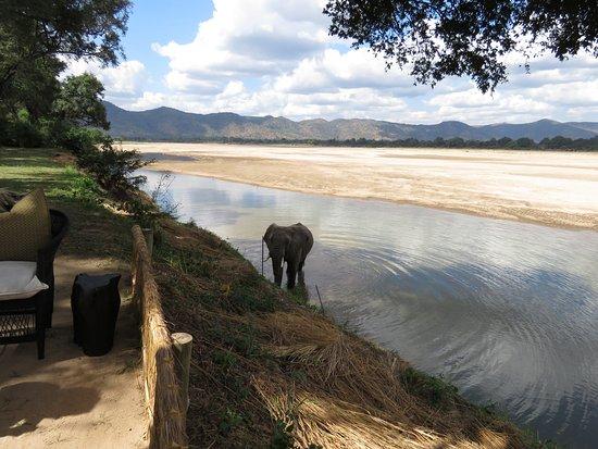 Chamilandu Bushcamp - The Bushcamp Company : An elephant comes to lunch
