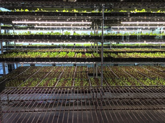 North Aurora, IL: They have their own greenhouse on property along with over 300 whiskeys, a hop garden, and great