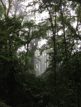 Reserva Bosque Nuboso Santa Elena: photo0.jpg