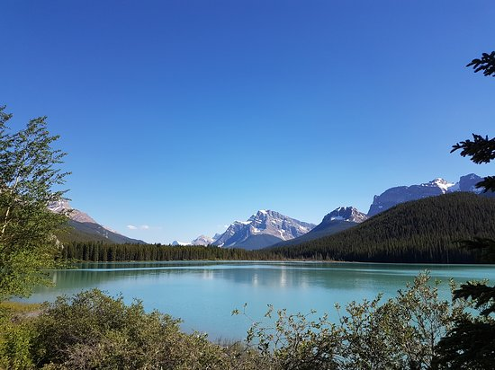 Waterfowl Lake Campground: 20170705_174224_large.jpg