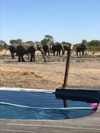 North-West District, Botsuana: Elephants visiting the waterhole.