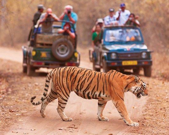 "Deccan Odyssey: See wildlife with ""Maharashtra Wild Trails"" journey"