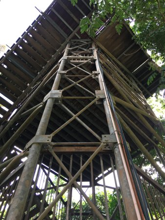 Cow Bay, Australia: Tower up to the canopy