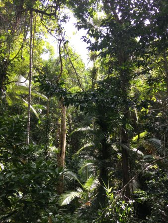 Daintree Discovery Centre: The Daintree rainforest