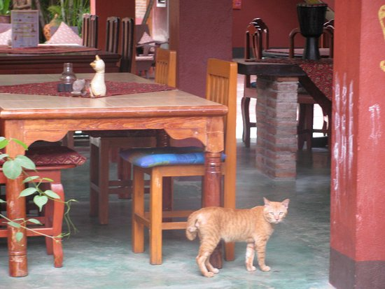 Joy's House: one of the 10 resident cats